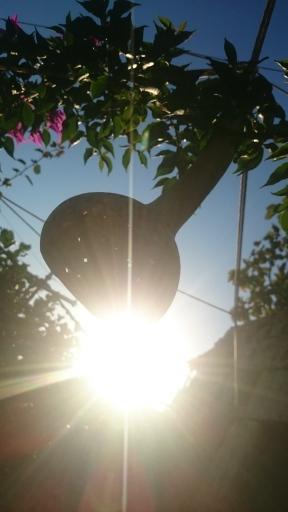 sunlit-gourd