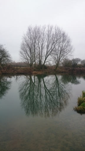 tree-reflected-in-river-thames